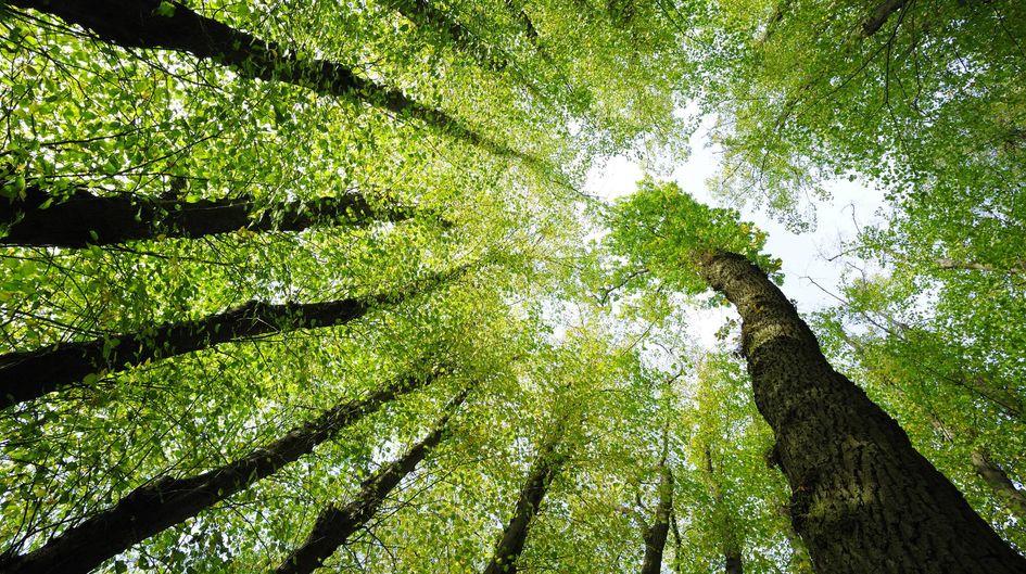 Organofunktionelle Silane werden weltweit unter Einhaltung höchster Qualitäts- und Umweltstandards produziert.