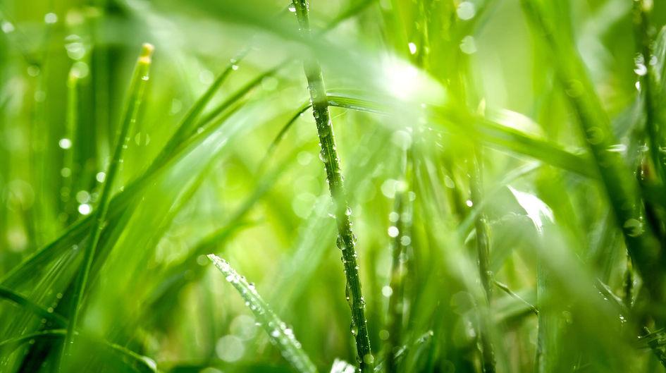 Der Umwelt zuliebe: Produkte der Dynasylan® HYDROSIL Familie sind wasserbasiert.
